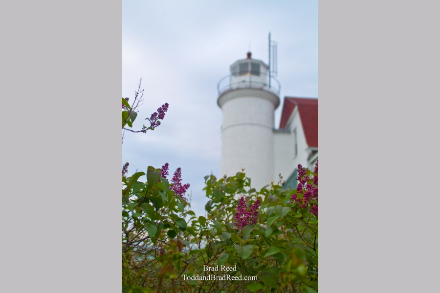 Lilacs at Point Betsie