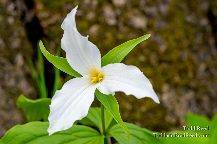 Trillium Grand Rapids Aman Park May (1431)